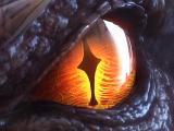 Tlcharger Code Triche Errant Hunters Soul APK MOD