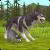 Tlcharger Code Triche WildCraft Sim sauvage en ligne 3D APK MOD