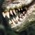 Tlcharger Gratuit Code Triche Durango Wild Lands APK MOD