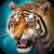 Tlcharger Gratuit Code Triche The Tiger APK MOD